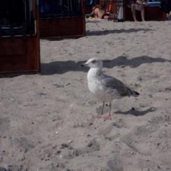 Grömitz Ostsee Ferienwohnung Sonnenschein für 4 Personen